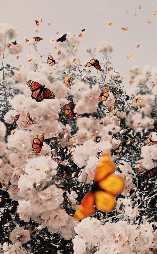 ayadawod33's Cover Photo