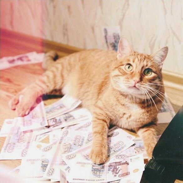 Картинки тигры кота брайна