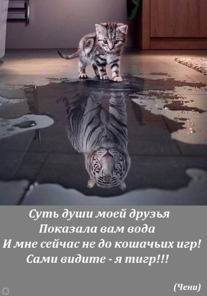 sashamelnik6's Cover Photo