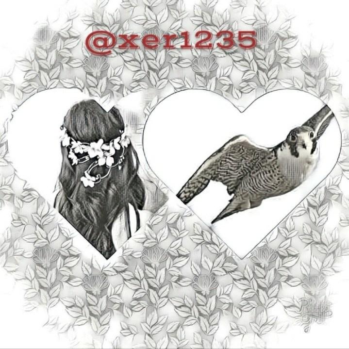 xer1235's Cover Photo