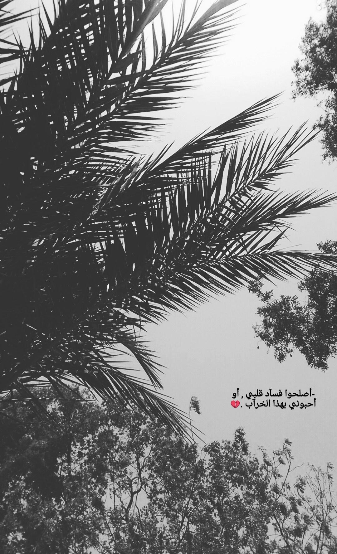 Mimial3so0ola's Cover Photo
